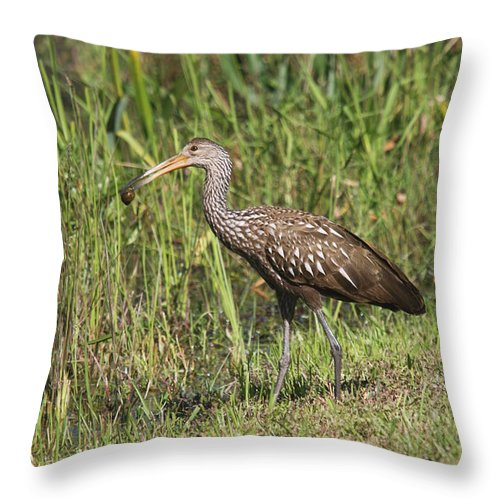 Limpkin Throw Pillow featuring the photograph Limpkin With Apple Snail by Christiane Schulze Art And Photography