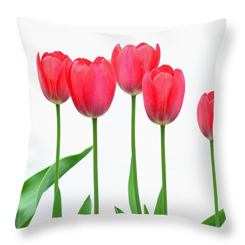 Flowers Throw Pillow featuring the photograph Line Of Tulips by Steve Augustin