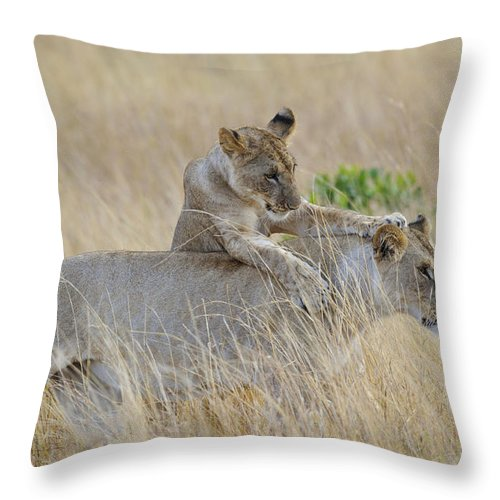 Africa Throw Pillow featuring the photograph Lion Cub Playing With Female Lion by John Shaw