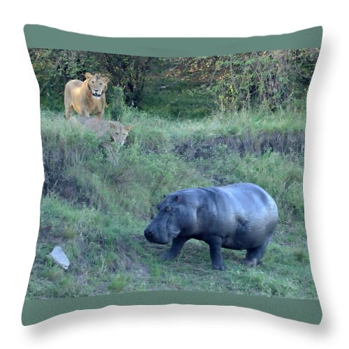 Danger Throw Pillow featuring the photograph Pair Of Lions Stalking Hippo by Tom Wurl
