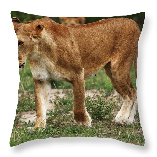 East Africa Throw Pillow featuring the photograph Lioness On The Masai Mara by Aidan Moran
