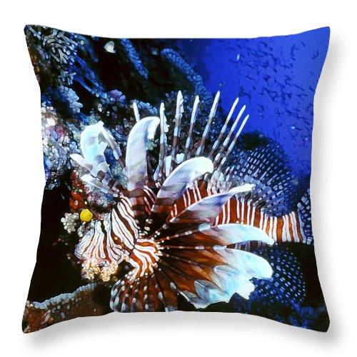 Micronesia Throw Pillow featuring the photograph Lionfish 4 by Dawn Eshelman