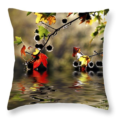 Liquidambar Maple Autumn Fall Flood Water Reflection Throw Pillow featuring the photograph Liquidambar In Flood by Sheila Smart Fine Art Photography
