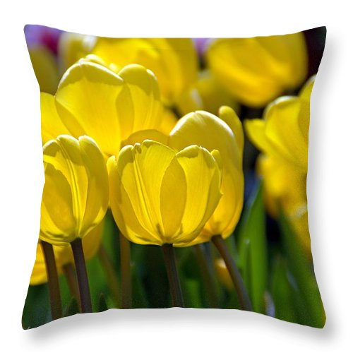 Yellow Blooms Throw Pillow featuring the photograph Lit From Within by Catherine Melvin