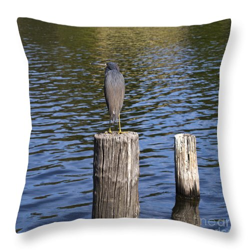 Heron Throw Pillow featuring the photograph Little Blue Heron - Egretta Caerulea by Allan Hughes