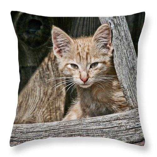Cat Throw Pillow featuring the photograph Little Charlie - Kitten By Wagon Wheel - Casper Wyoming by Diane Mintle