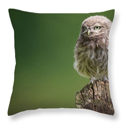Owlet Throw Pillow featuring the photograph Little Fuzzy by Markbridger