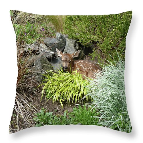 Abstract Throw Pillow featuring the photograph Little Lord Fawnleroy by Lauren Leigh Hunter Fine Art Photography
