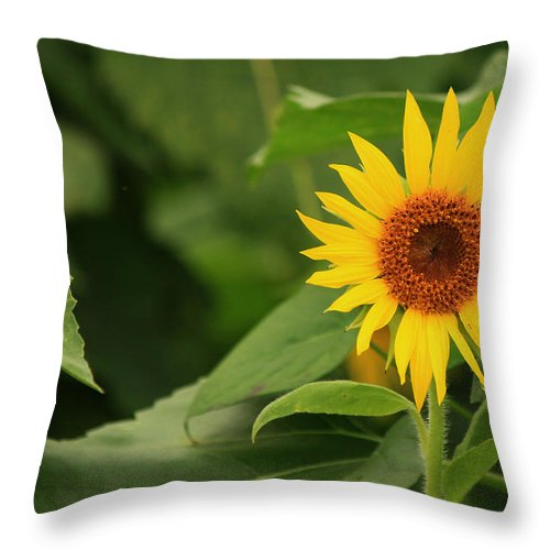 Sunflowers Throw Pillow featuring the photograph Little One by Amy Warr