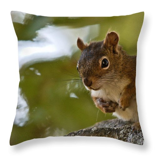 Throw Pillow featuring the photograph Little Red by Cheryl Baxter