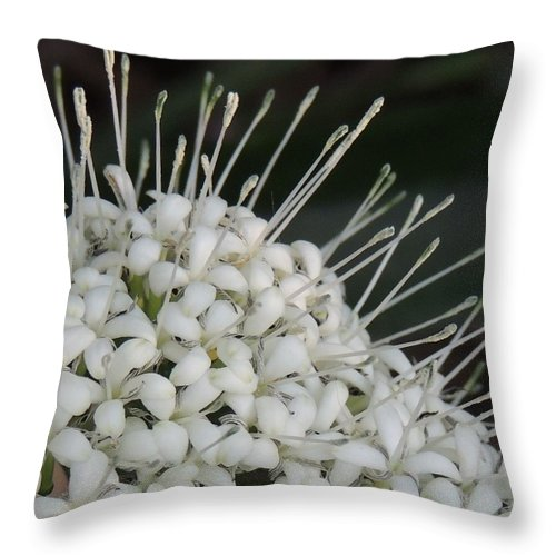 Macro Throw Pillow featuring the photograph Little Ribbons by Denise Clark