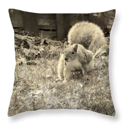 Squirrel Image Throw Pillow featuring the photograph Little Scamp by Gothicrow Images