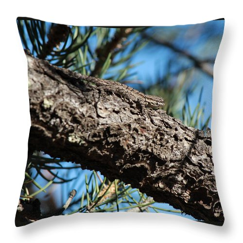 Nature Throw Pillow featuring the photograph Lizard Bathing In The Sunshine by Phyllis Bradd