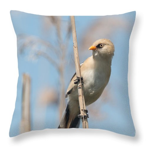 Bulgaria Throw Pillow featuring the photograph ln11 Bearded Reedling Juvenile by Jivko Nakev