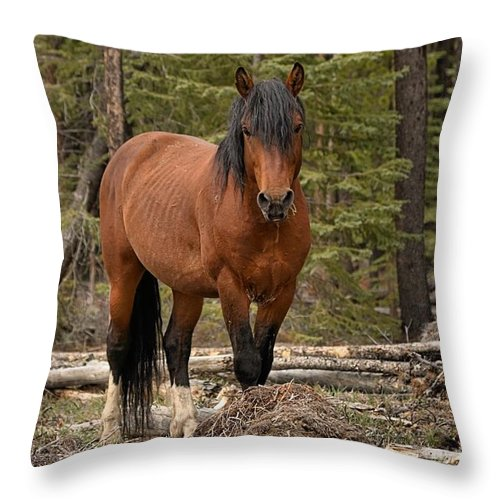 Wild Horse Throw Pillow featuring the photograph Locked On by James Anderson