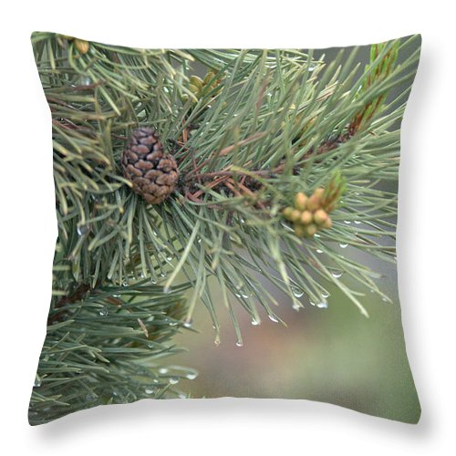 Pine Throw Pillow featuring the photograph Lodge Pole Pine In The Fog by Frank Madia