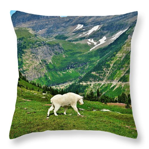 Glacier National Park Throw Pillow featuring the photograph Logan Pass Mountain Goat by Greg Norrell