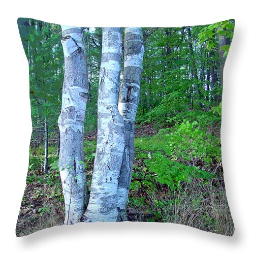 Birch Tree Throw Pillow featuring the photograph Lone Birch In The Maine Woods by Suzanne Gaff