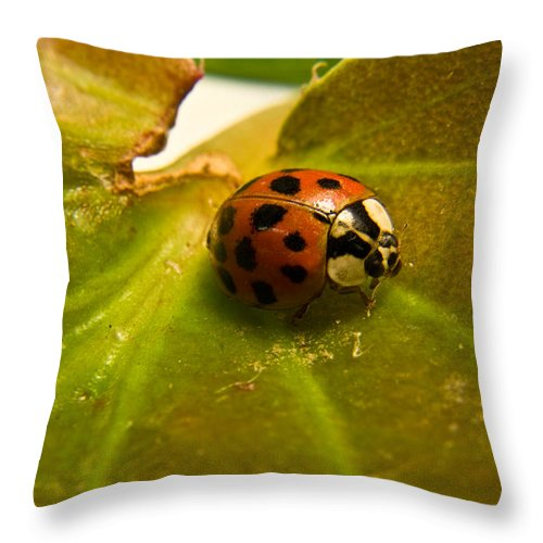 Beetle Throw Pillow featuring the photograph Lone Lady Bird Beetle by Douglas Barnett
