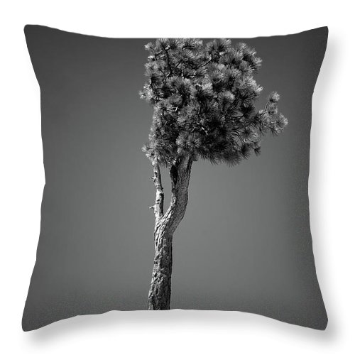 Black & White Throw Pillow featuring the photograph Lone Pine II by Peter Tellone