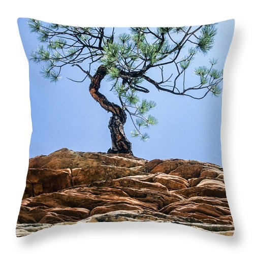 Lone Pine Throw Pillow featuring the photograph Lone Pine by Kelley King