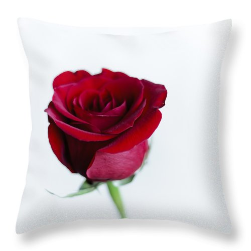 Alone Throw Pillow featuring the photograph Lone Rose by Christi Kraft