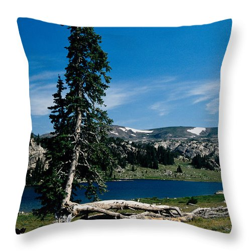 Mountains Throw Pillow featuring the photograph Lone Tree at Pass by Kathy McClure