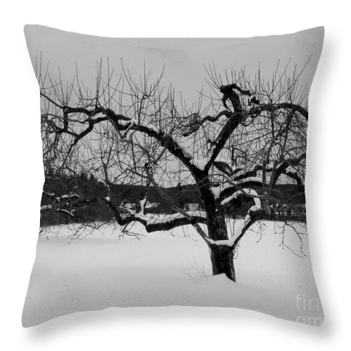 Snow Throw Pillow featuring the photograph Lonely Tree by Ray Konopaske