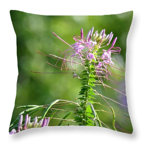 Long Lavender Fingers Throw Pillow featuring the photograph Long Lavender Fingers by Maria Urso