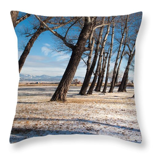 Trees Throw Pillow featuring the photograph Long Shadows by Fran Riley