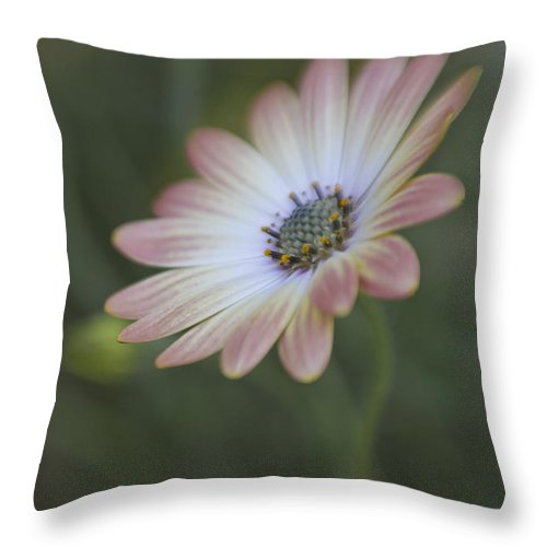 Bloom Throw Pillow featuring the photograph Longing by David and Carol Kelly
