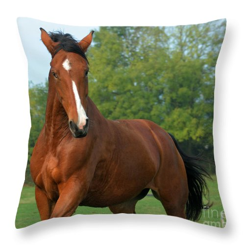 Horse Throw Pillow featuring the photograph Look How Pretty I Am by Angel Ciesniarska