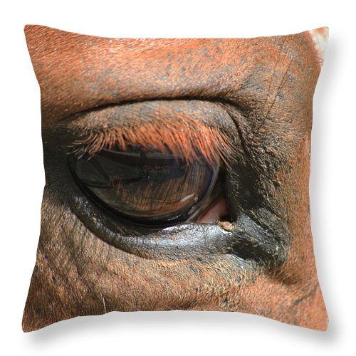 Horse Throw Pillow featuring the photograph Look Into My Eye by TN Fairey