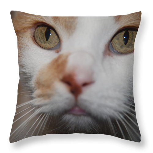 Orange Throw Pillow featuring the photograph Look Into My Eyes by Mark McReynolds