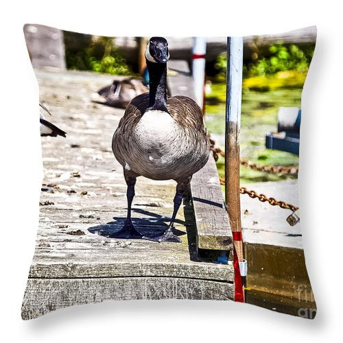 Mallard.dock Throw Pillow featuring the photograph Looking At You by David Fabian