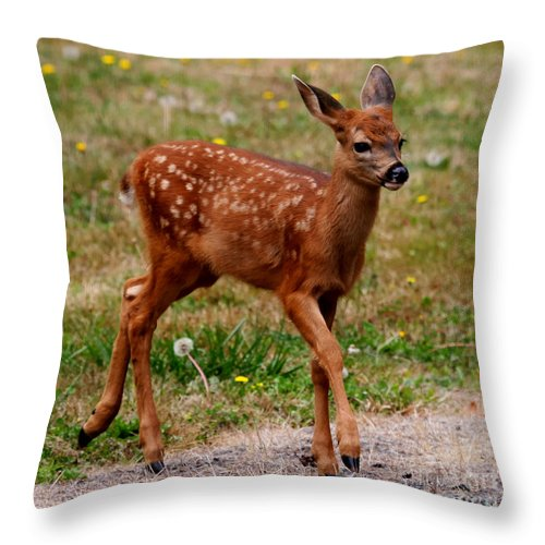 Deer Throw Pillow featuring the photograph Looking For Mom - Pacific Northwest Washington by Tap On Photo