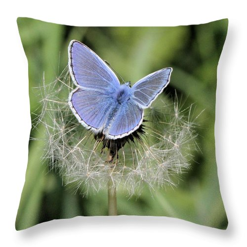 European Common Blue Throw Pillow featuring the photograph Looking For Nectar In All The Wrong Places by Doris Potter