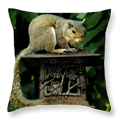 Squirrel Throw Pillow featuring the photograph Looking For Nuts by James C Thomas