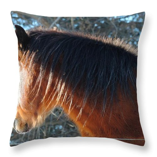Horse Throw Pillow featuring the photograph Looking Into The Sun by Regine Brindle