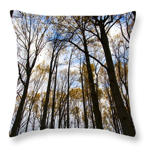 Looking Throw Pillow featuring the photograph Looking Skyward Into Autumn Trees by Bill Cannon