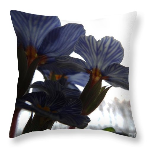 Primula Throw Pillow featuring the photograph Looking Up by Dana Hermanova