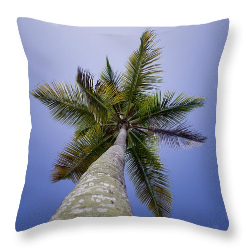 Antigua And Barbuda Throw Pillow featuring the photograph Looking Up by Ferry Zievinger