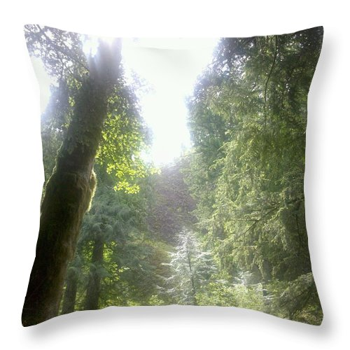 Trees Throw Pillow featuring the photograph Looking Up by Heather L Wright