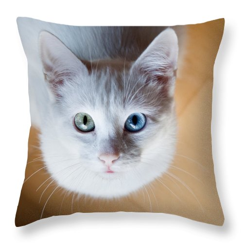 Cat Throw Pillow featuring the photograph Looking Up by Jorge Maia