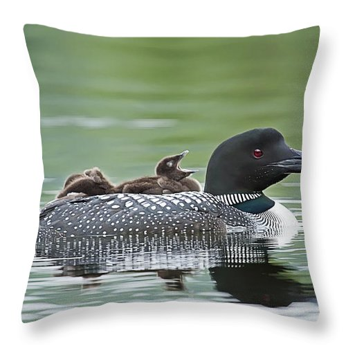 Common Loon Throw Pillow featuring the photograph Loon Chick - Big Yawn by John Vose