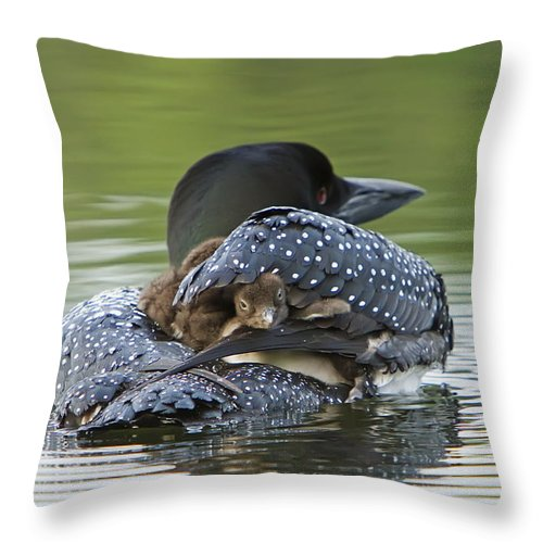 Common Loon Throw Pillow featuring the photograph Loon Chick - Peek A Boo by John Vose