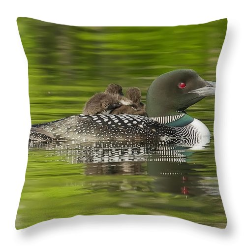 Common Loon Throw Pillow featuring the photograph Loon Chicks - Best Buddies by John Vose