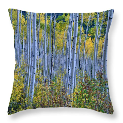 Aspen Grove Throw Pillow featuring the photograph Lost In The Crowd by Jeremy Rhoades