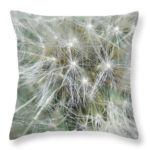 Dandelion Throw Pillow featuring the photograph Lost In The Moment by Diannah Lynch