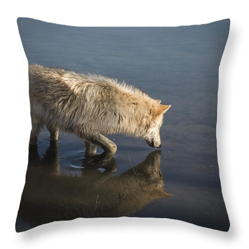 Animal Throw Pillow featuring the photograph Lost by Jack R Perry